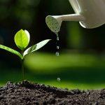 Lahir, Tumbuh dan Berkembang