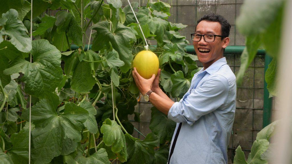 Nah ini adalah melon emas